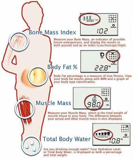 how to find body fat composition